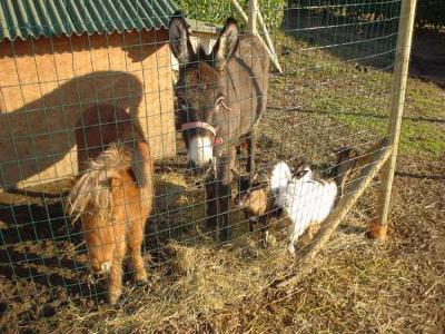 Mangime pollaio for Animali da giardino