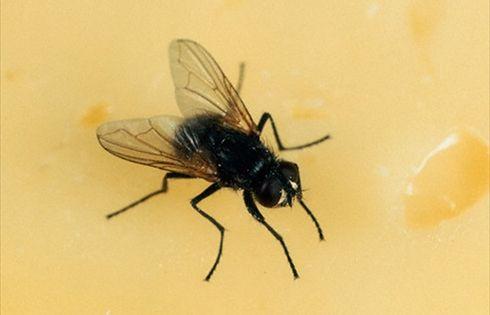 Disinfestazione zanzare naturale