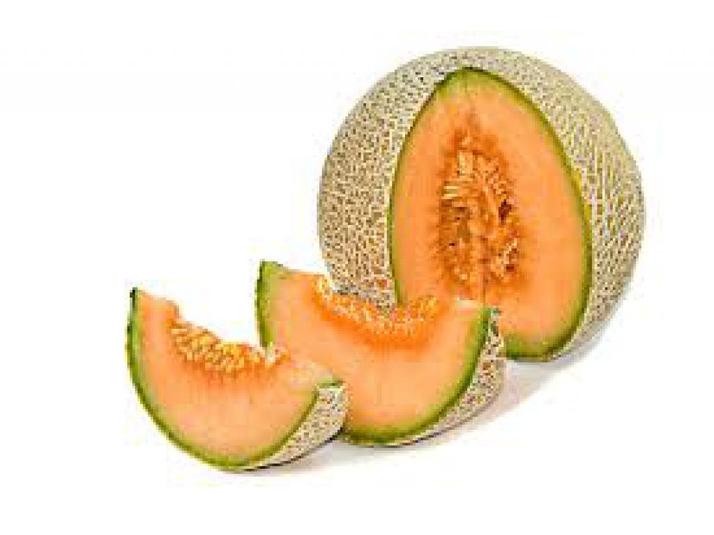 Guida alla coltivazione del melone for Melone coltivazione