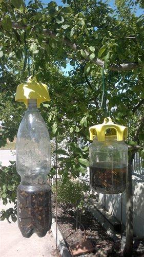 Tap trap difesa ecologica cromotropica for Trappola piccioni